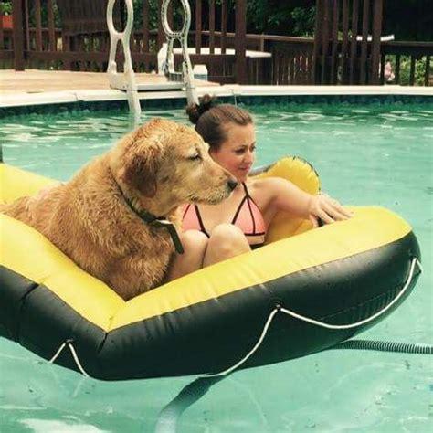 do golden retrievers any predators meet the lakeville who a golden retriever puppy five times because he