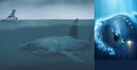 imagenes reales megalodon pin the megalodon 4 proudly shows off its 2500m 8200 ft on