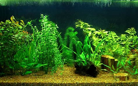 aquarium design wallpaper mini aquarium creative design wallpaper 14 plant