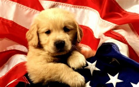 dogs day hd national day wallpapers for celebration and concern powerpoint e