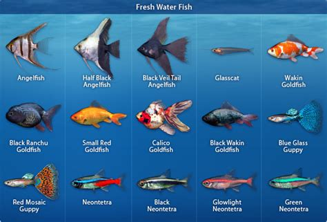 types of aquarium fish animals research aquarium fish