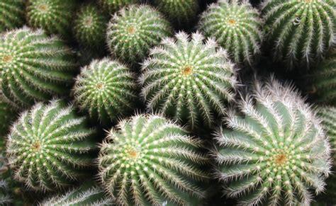 piante da giardino resistenti al gelo 8 piante che resistono al freddo e al gelo per un