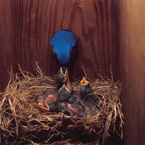 wild birds unlimited how to protect my bluebird house