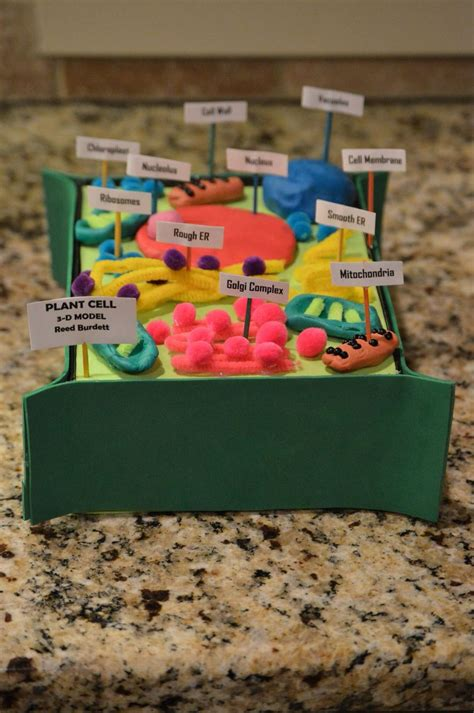 Reed S 7th Grade Advanced Science Plant Cell Project 3 D