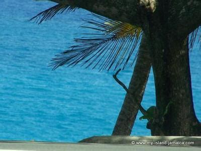 attractions in portland jamaica fun places to visit in