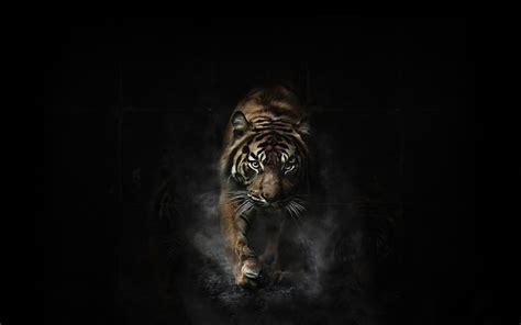 wallpaper hd black tiger tiger hd wallpapers free download