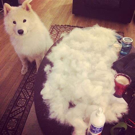 Cat Shedding Hair by 15 Pics That Perfectly Sum Up A Pet