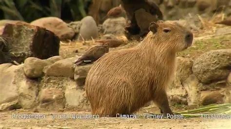 fotos animales silvestres tr 225 fico de animales silvestres a lo legal cap 237 tulo 10