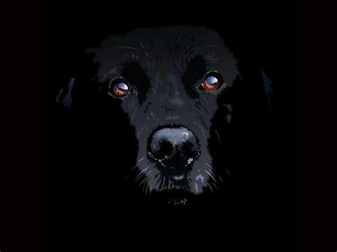 libro i had a black dog di matthew avevo un cane nero