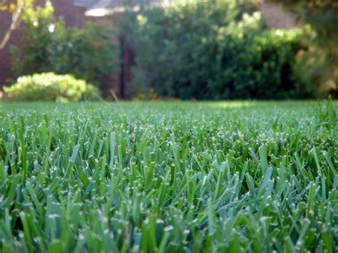 turf fertilization