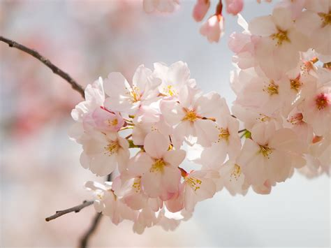 spring flower amazing spring flowers wallpapers 521 entertainment world