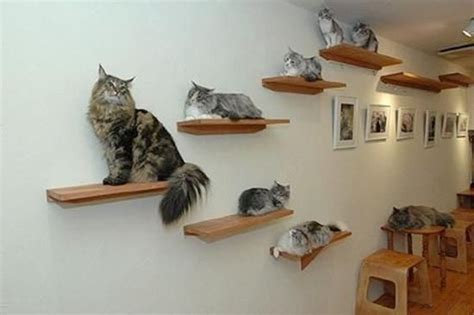 cat shelves great ideas pinterest