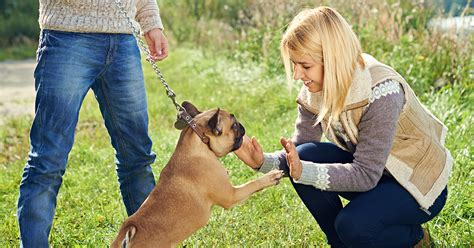 how to your not to jump on visitors how to stop a puppy from jumping on visitors tips