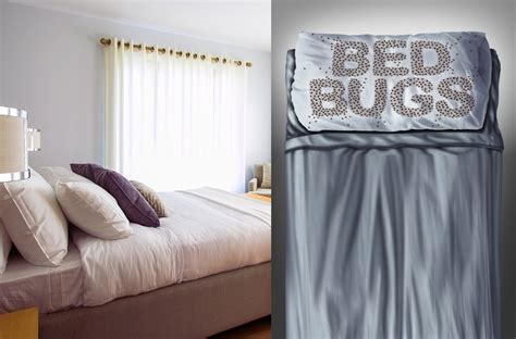How To Dispose Of Mattress With Bed Bugs by Infographic Guide To Safe Bed Bug Mattress Disposal