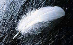 feather with colorful feathers wallpaper 1272