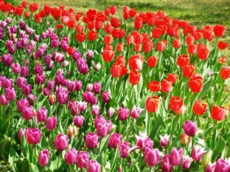 bordure fiorite perenni il riordino delle bordure fiorite