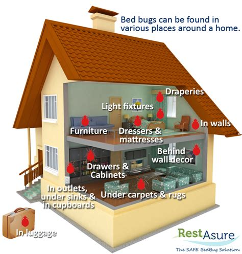 find a bed restasure the safe bed bug solution