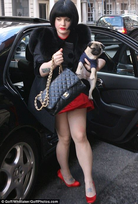 pug leather jacket pug dogs are beloved by royalty but are they adorable or inbred freaks daily mail