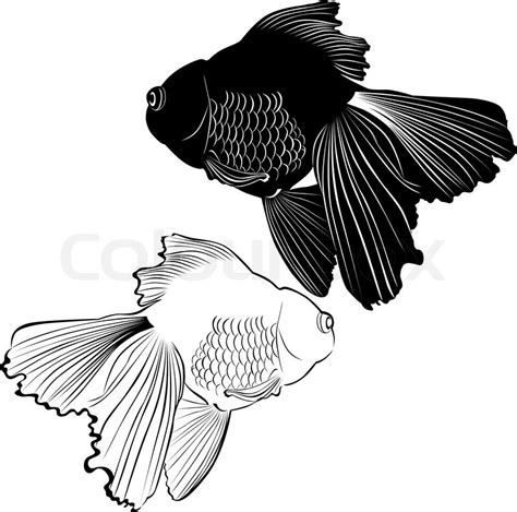 goldfish carp stock vector colourbox