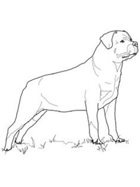 rottweiler puppies coloring pages rottweiler puppy favorite dog colouring pages