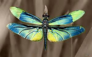 dragonfly colors colorful dragonfly wallpaper
