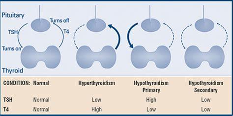 tsh reflex test thyroid stimulating hormone effects normal range levels