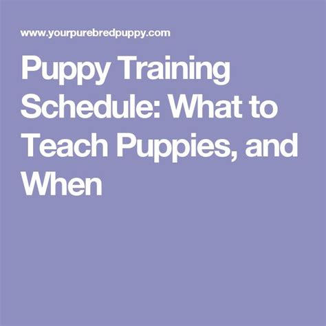 crate schedule for 8 week puppy 1000 ideas about puppy schedule on puppy