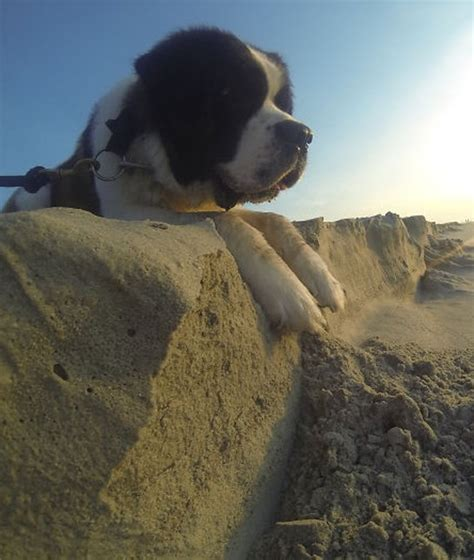 how far can dogs see 15 perfectly timed photos as far as the eye can see