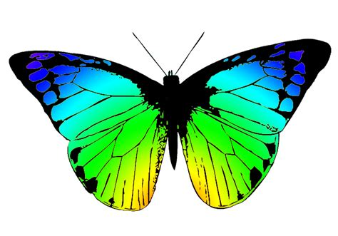 free butterfly clipart butterfly clipart