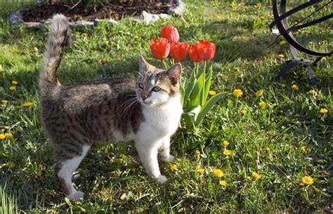 cat garden cat deterrents bird