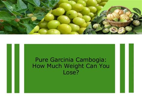 How Much Weight Can You Lose On A Detox Diet by Garcinia Cambogia How Much Weight Can You Lose
