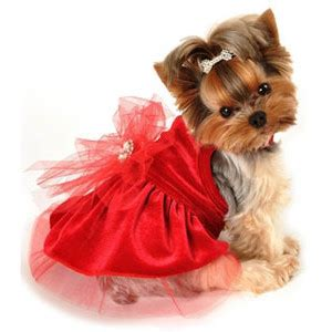fancy puppy dress dresses chihuahua clothes pup polyvore