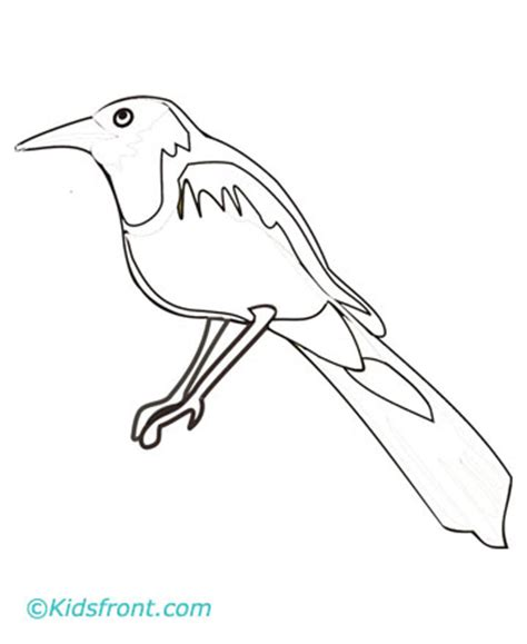 magpie bird coloring page magpie coloring page drawing fill colors to print magpie