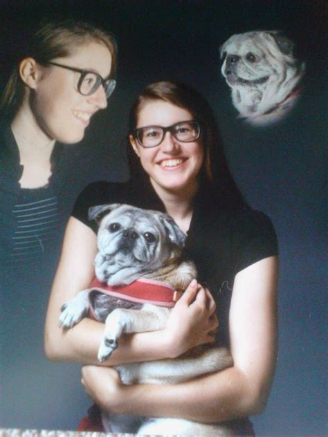 r pugs r pugs on pholder 1000 r pugs images that made the world talk