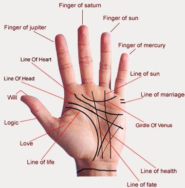 palm reading diagram astrology reading