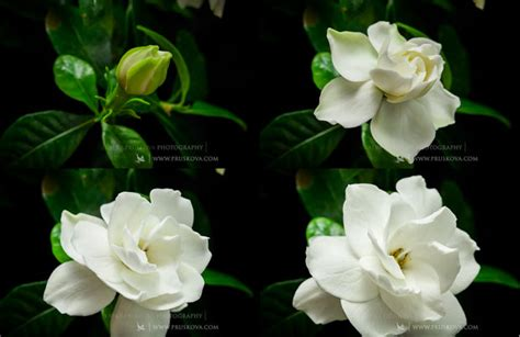 Simple Yet Beautiful Blooms by Floral Fireworks A Simple Yet Beautiful Time Lapse Of