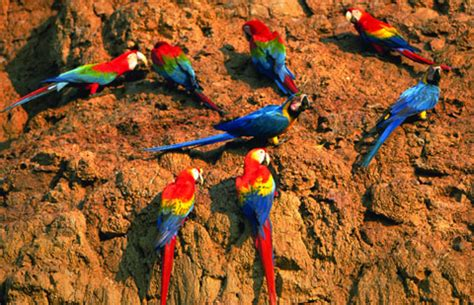 peru natural eden of tambopata travel guide tambopata lodges and tours