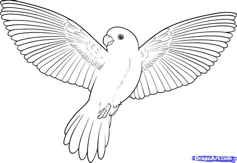 bird wing coloring page how to draw a flying bird how to draw a bird step by