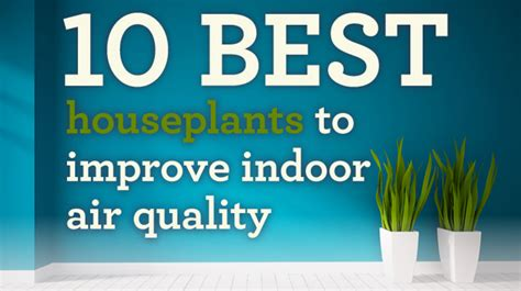 infographic these pollution busting houseplants will