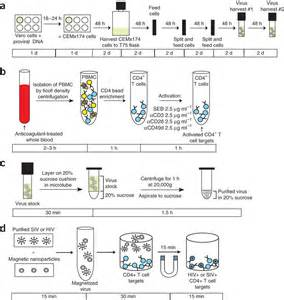 Sucrose Cushion Figure 2 Synchronous Infection Of Siv And Hiv In Vitro