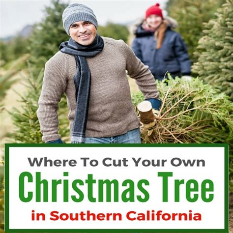 where to cut your own christmas tree in southern