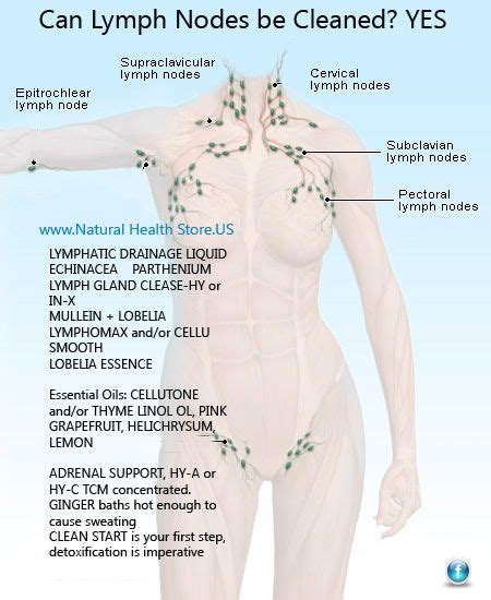 Lymph Node Detox Bath by 17 Best Ideas About Lymph Nodes On Lymphatic