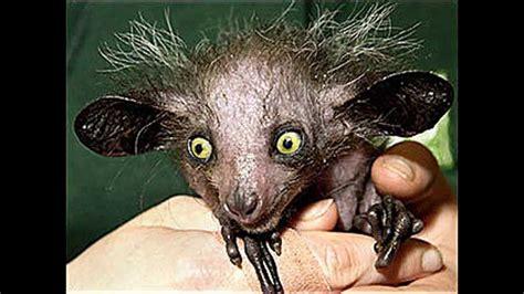imagenes sorprendentes de animales extraños animais estranhos e curiosos do mundo os mais estranhos
