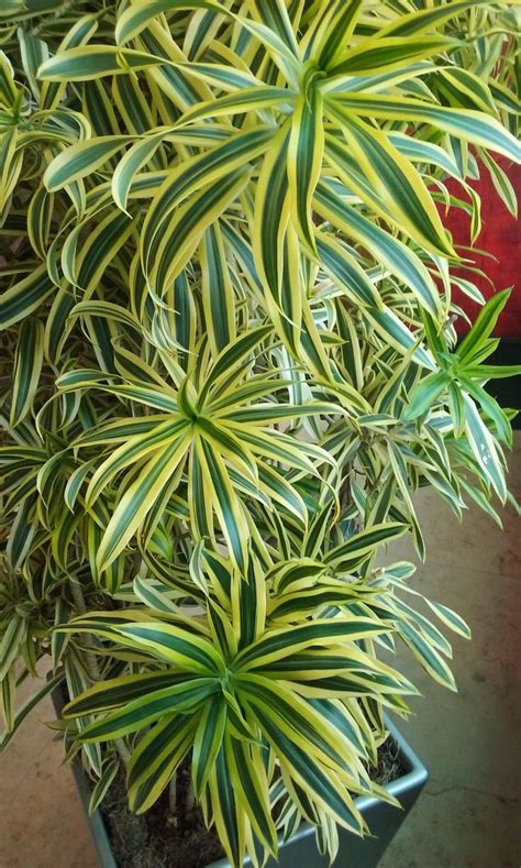 indoor plants india as 25 melhores ideias de indoor plants india no pinterest