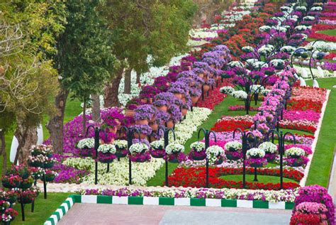 Al S Garden by The Garden City Al Ain Paradise