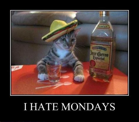 I Hate Mondays Meme - demotivational pictures i hate mondays all