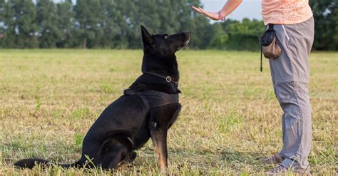 how to become pack leader lovable dogs how to win your s loyalty and behavior by becoming the pack
