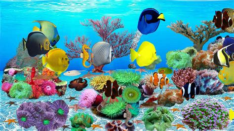best fish screensaver 9 fresh best aquarium screensaver aquarium