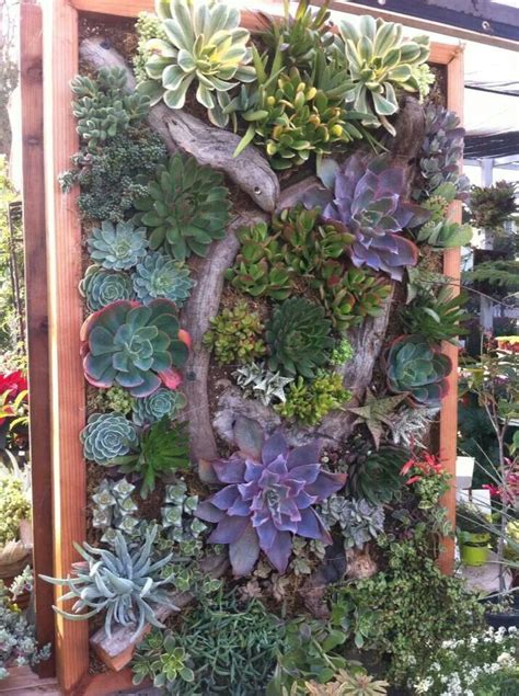 Best Succulents For Vertical Garden 1000 Images About Succulent Plants On Cement