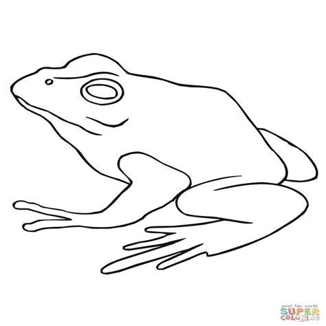 imagenes para colorear rana dibujo de rana de bosque para colorear dibujos para